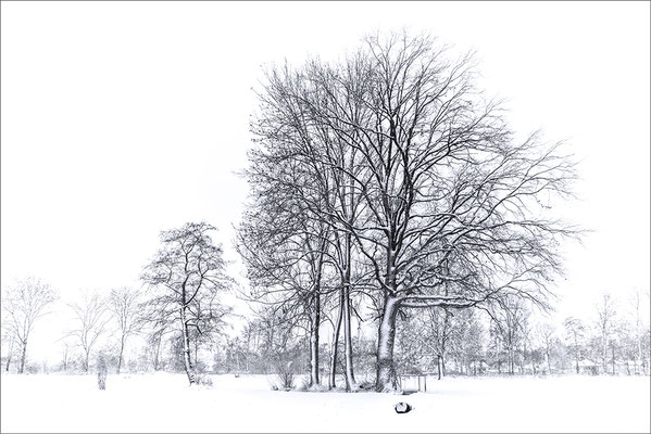 Baumgruppe, Wässermatten Lotzwil.