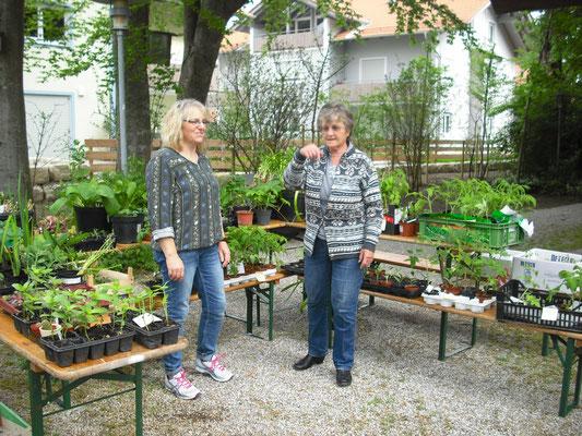 Pflanzentauschmarkt beim Frühjahrs- und Herbstmarkt im Naturpavillon Zellerpark