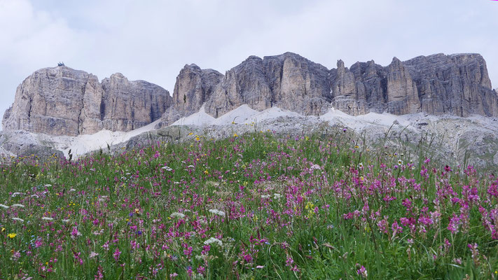Italien, Blumenwiese am Pordoijoch