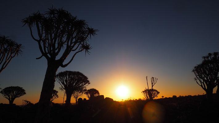 Sonnenuntergang im Köcherbaumwald bei Keetmanshoop