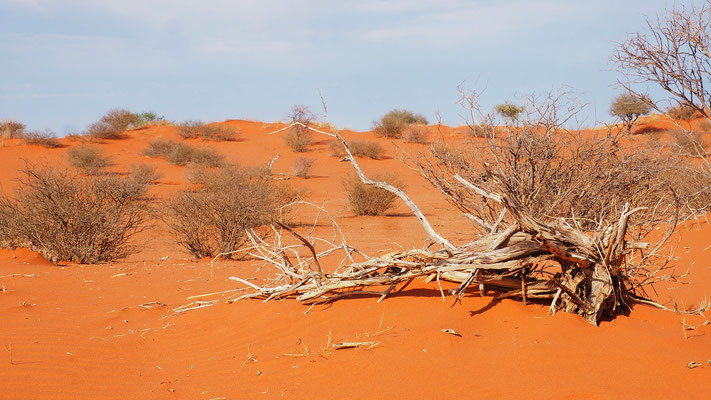 """die """"rote"""" Kalahari"""
