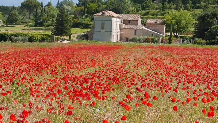 Italien, Mohnfeld