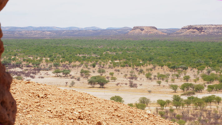 viele Mopanebäume im Ugab-Tal