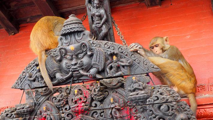Vorsicht vor den Tempelaffen, Nepal