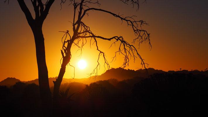Sonnenaufgang im Köcherbaumwald