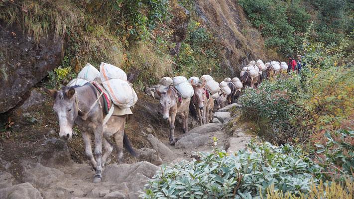 zwischen Surke und Kharikhola, Nepal