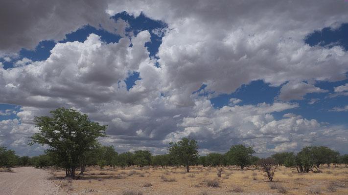 Landschaft in Etosha