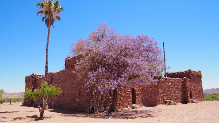 Namibia, Jacarandabaum beim Schloß Duwisib