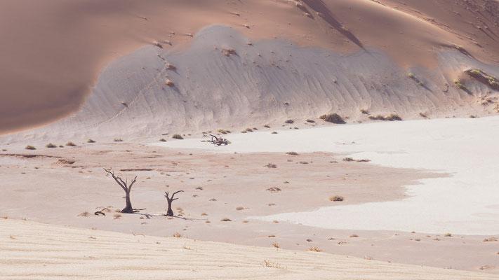 Kameldornbäume im Hiddenvlei