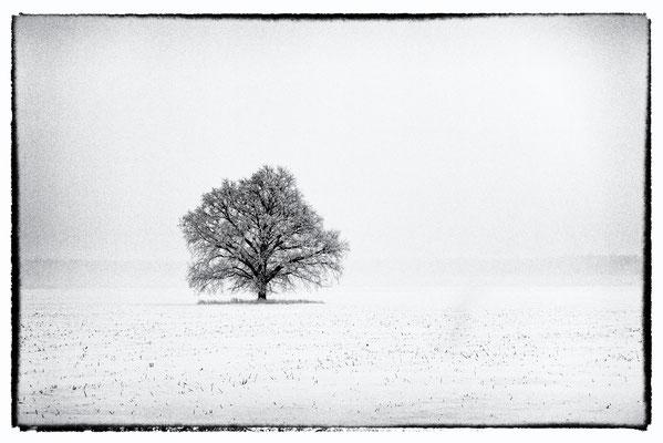 Winter Impression, Ezeres Pagasts, Latvia