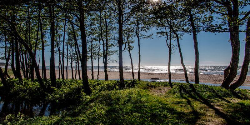 the Baltic Shore, near Liejpaja, Latvia
