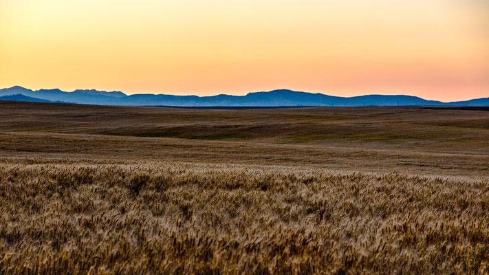 """"""" fields of gold II"""", hwy 2, washington"""