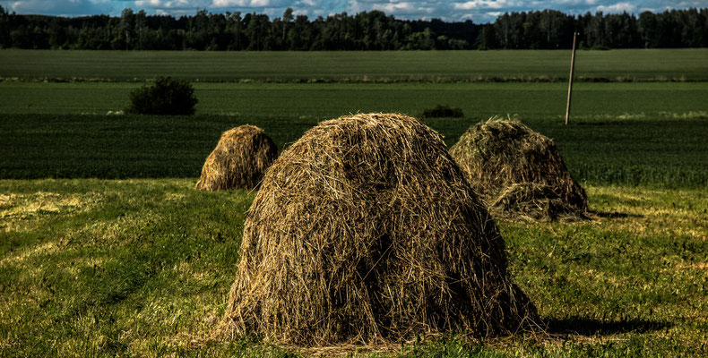 Haystacks (as they used to be..), Ezere Pagasts, Latvia