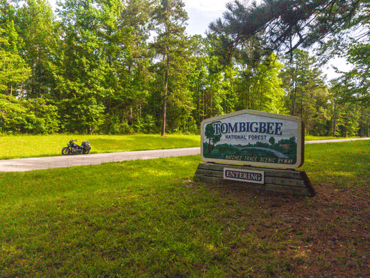 tombigee national forest, natchez trace parkway, mississippi