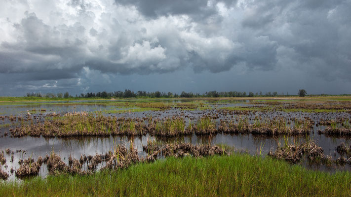 the swamps, everglades, florida