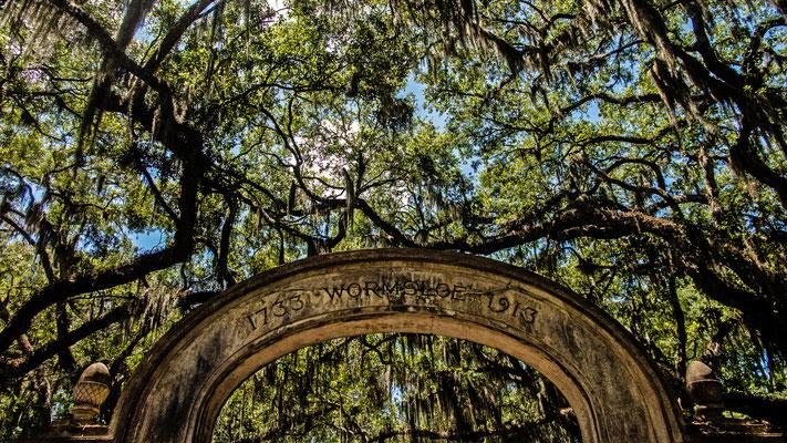 wormsloe estate, savannah, georgia