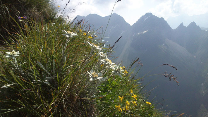 Unser Edelweissberg - die Höfats