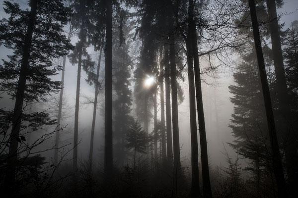 Hieringer Rolf / Jura fast im Nebel