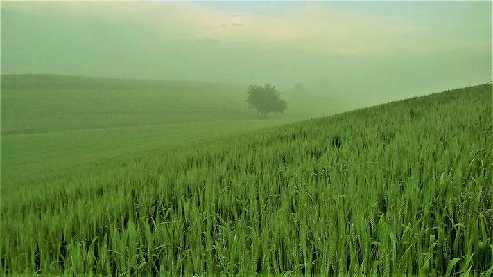 16 Radic Dragica - In den Tiefen der Wiese