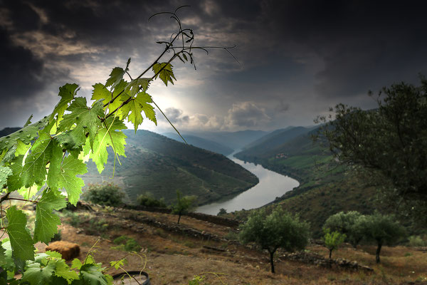 03 Abrunhosa Jaime - Douro