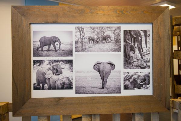 """Foto: Markus Buess; Portfolio """"Elefanten"""" von Rolf Hieringer"""