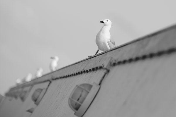 Foto: Rolf Hieringer...Algarve