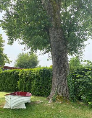 Foto: Hans Zürcher_moderner Einbaum