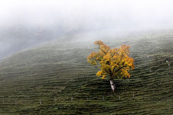 15 Abrunhosa Jaime - Herbstzauber1