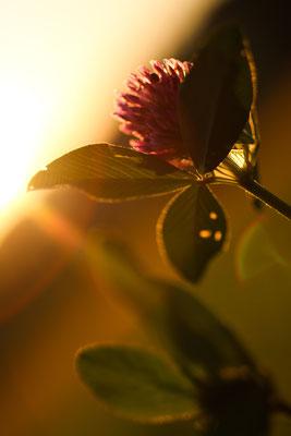 Abrunhosa Jaime - petite fleurs