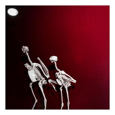 20 Balmer Pascal - Eagle bones