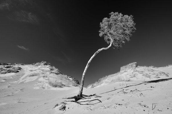 Impression auf der Großen Düne bei Leba (Polen)