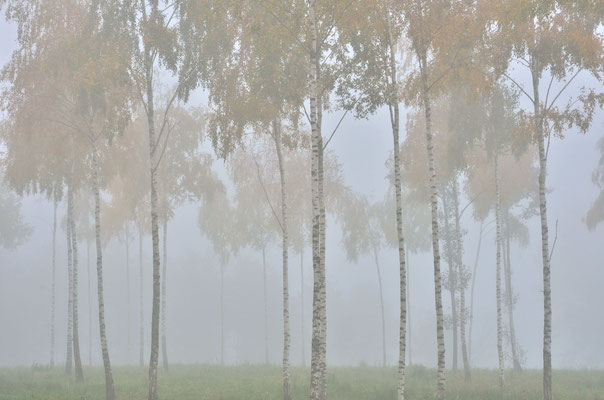 Herbstnebel in Masuren (Polen)
