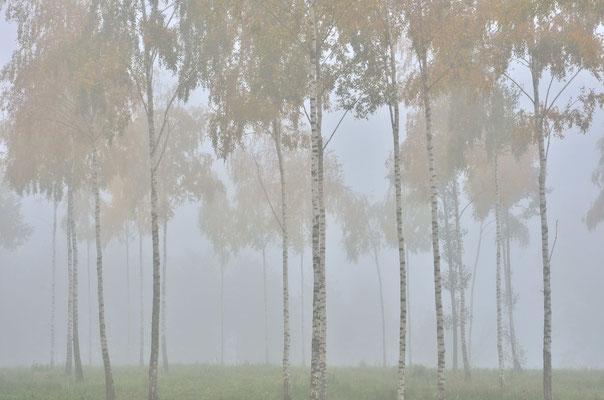 Herbstnebel in Masuren