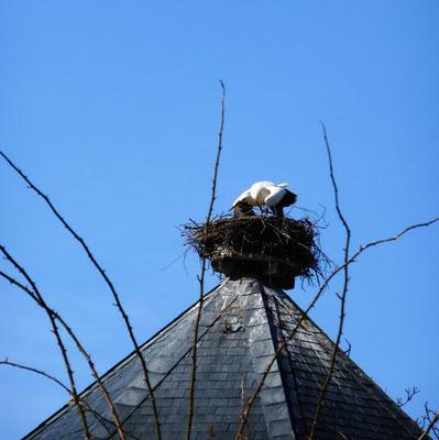 Flieg weiter, dieses Nest ist belegt! (1)