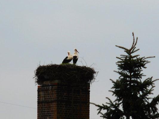 Ein Storchenpaar in Bälow