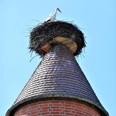 Auch auf dem linken Turm des Besucherzentrums hat sich ein Storch eingenistet.
