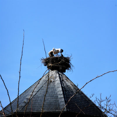 Flieg weiter, dieses Nest ist belegt! (3)