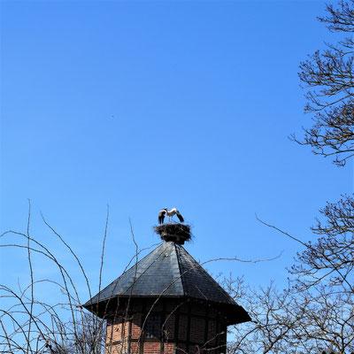 Flieg weiter, dieses Nest ist belegt! (5)