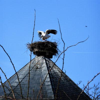 Flieg weiter, dieses Nest ist belegt! (2)