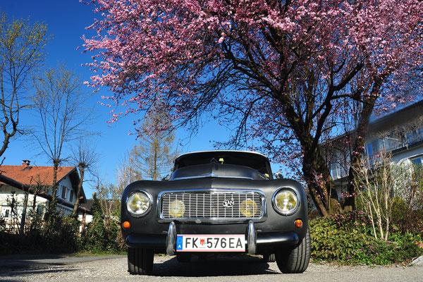 Foto: Andreas Ender - Volvo PV 544 E Special - Baujahr 1964 | von unserem iG Mitglied: Mike