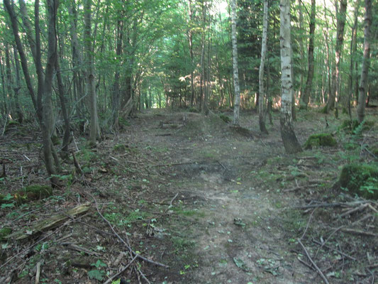 Illegale Mountainbike Strecke