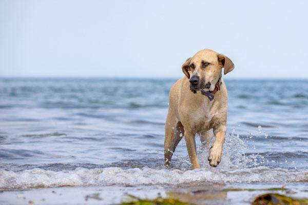 Hundeshooting vor dem Leuchtturm Falshöft