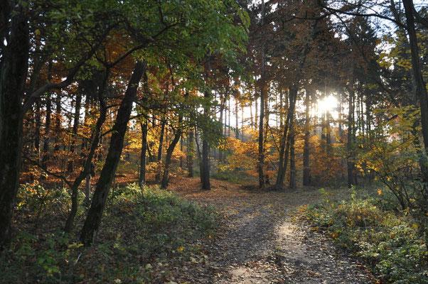 Die schöne Insel Usedom.Natur pur.   Foto: ©UTG