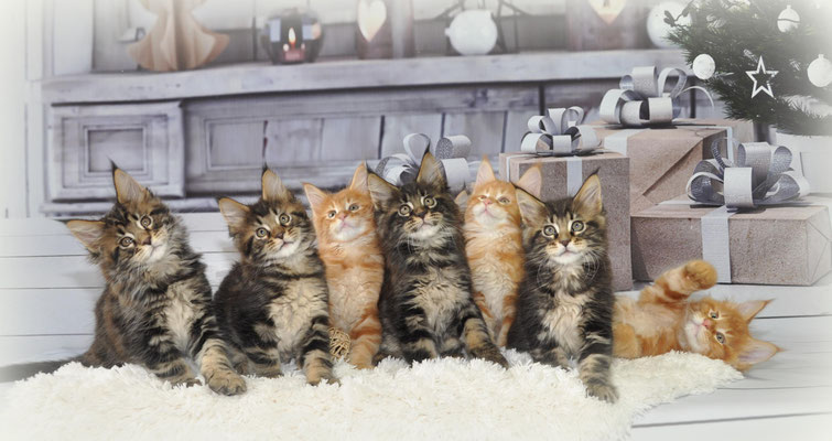 Bébés à 2 mois; Nikko, Nacho,Nil's Jack,Nando,Naomi,Nino,Naboo