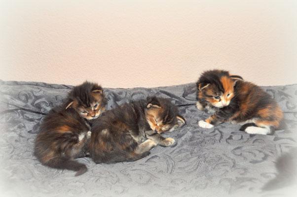 les 3 femelles 3 semaines