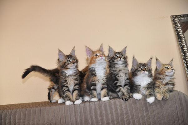Lennon, Lola, Lenny, Loubi, Lolita
