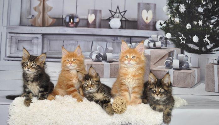 Bébés à 2 mois ; Nino, Naboo, Nacho, Naomi, Nando