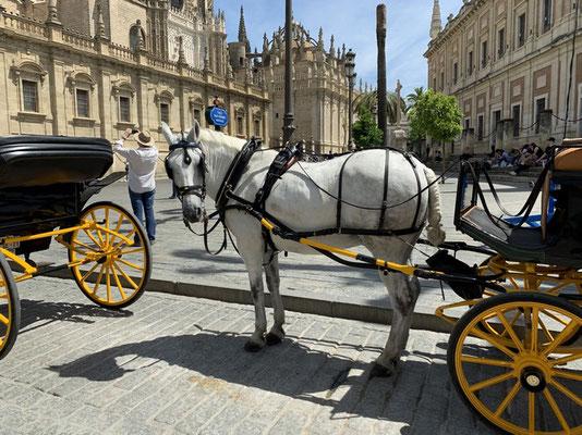 teures Transportmittel in der Stadt: Pferdekutschen