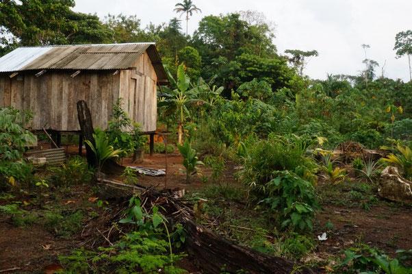 Plantage mit Maniok, Bananen und mehr