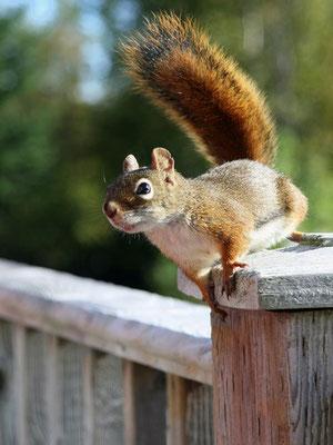 ... das Eichhörnchen war echt!